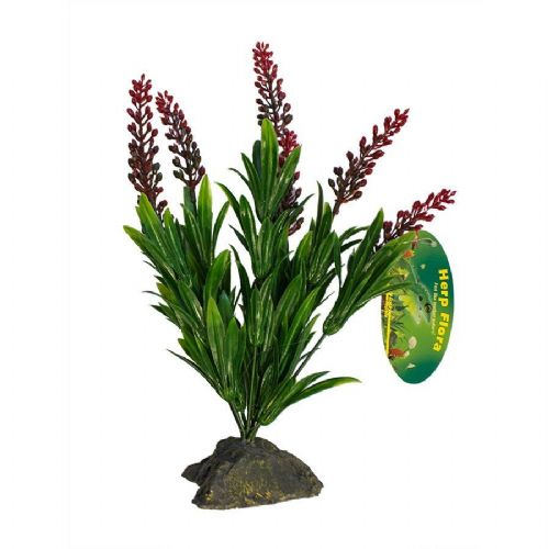 LR Borneo Grass, red spikes 30cm, IF-62 PLB004